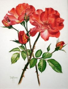 Playboy Roses colored pencil (3)
